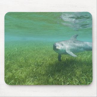 Bottlenose Dolphins Tursiops truncatus) 24 Mouse Mat
