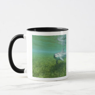 Bottlenose Dolphins Tursiops truncatus) 24 Mug