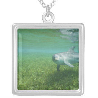 Bottlenose Dolphins Tursiops truncatus) 24 Silver Plated Necklace