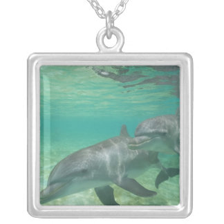 Bottlenose Dolphins Tursiops truncatus) 25 Silver Plated Necklace