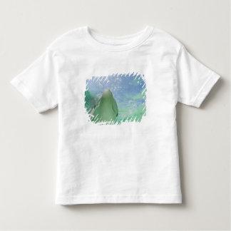 Bottlenose Dolphins Tursiops truncatus) 26 Toddler T-Shirt