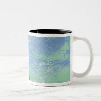 Bottlenose Dolphins Tursiops truncatus) 26 Two-Tone Coffee Mug