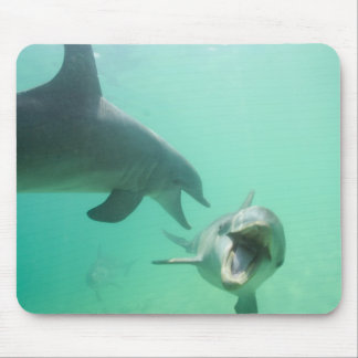 Bottlenose Dolphins Tursiops truncatus) 27 Mouse Mat