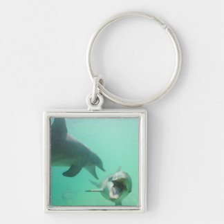 Bottlenose Dolphins Tursiops truncatus) 27 Silver-Colored Square Key Ring