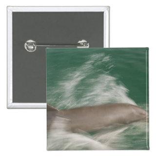 Bottlenose Dolphins Tursiops truncatus) 28 15 Cm Square Badge