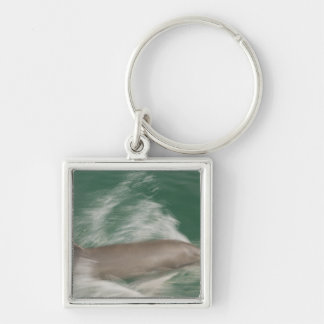 Bottlenose Dolphins Tursiops truncatus) 28 Silver-Colored Square Key Ring