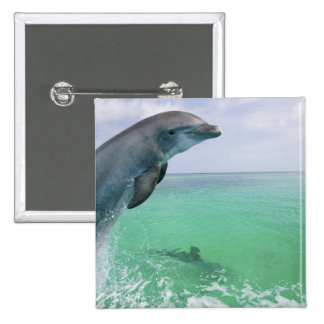 Bottlenose Dolphins Tursiops truncatus) 29 15 Cm Square Badge