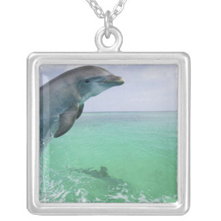Bottlenose Dolphins Tursiops truncatus) 29 Silver Plated Necklace