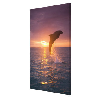Bottlenose Dolphins Tursiops truncatus) 2 Canvas Print