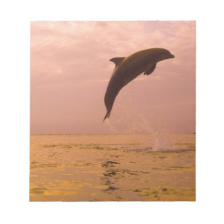 Bottlenose Dolphins (Tursiops truncatus) 2 Notepad