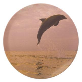 Bottlenose Dolphins (Tursiops truncatus) 2 Plate