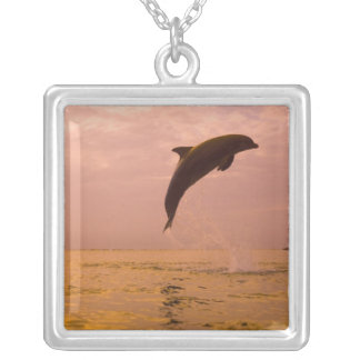 Bottlenose Dolphins (Tursiops truncatus) 2 Silver Plated Necklace