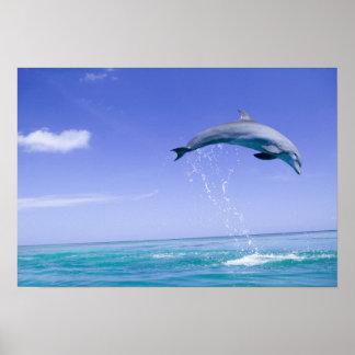 Bottlenose Dolphins Tursiops truncatus) 31 Poster