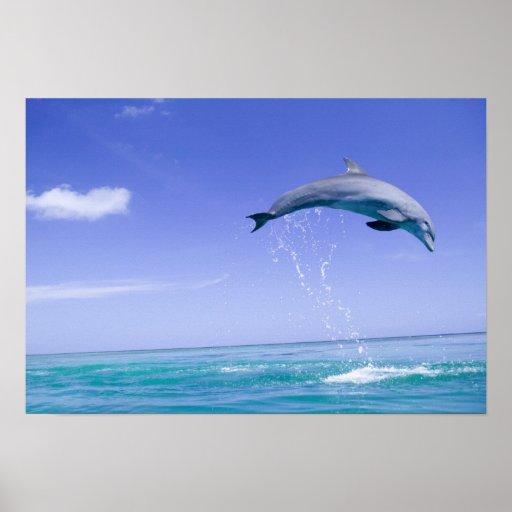 Bottlenose Dolphins Tursiops truncatus) 31 Posters