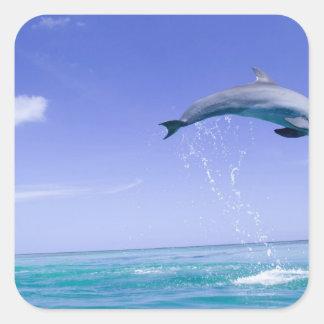 Bottlenose Dolphins Tursiops truncatus) 31 Square Sticker