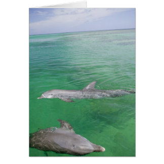 Bottlenose Dolphins Tursiops truncatus) 3 Card