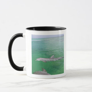 Bottlenose Dolphins Tursiops truncatus) 3 Mug