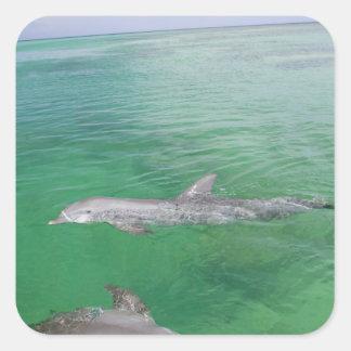 Bottlenose Dolphins Tursiops truncatus) 3 Stickers
