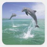 Bottlenose Dolphins Tursiops truncatus) 4
