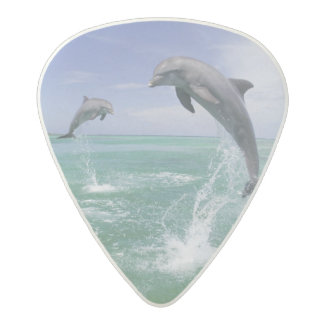 Bottlenose Dolphins Tursiops truncatus) 4 Acetal Guitar Pick