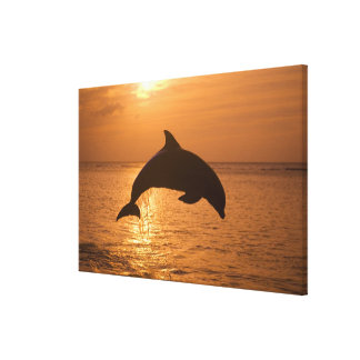 Bottlenose Dolphins Tursiops truncatus) 4 Stretched Canvas Print