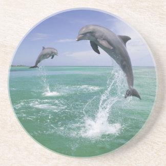 Bottlenose Dolphins Tursiops truncatus) 4 Coaster