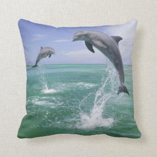 Bottlenose Dolphins Tursiops truncatus) 4 Cushion