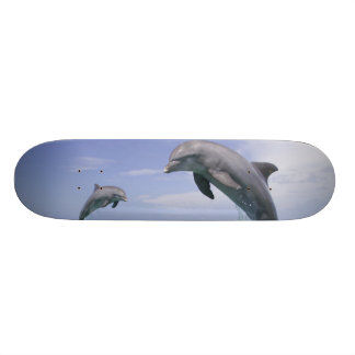 Bottlenose Dolphins Tursiops truncatus) 4 Custom Skateboard