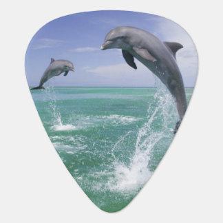 Bottlenose Dolphins Tursiops truncatus) 4 Guitar Pick