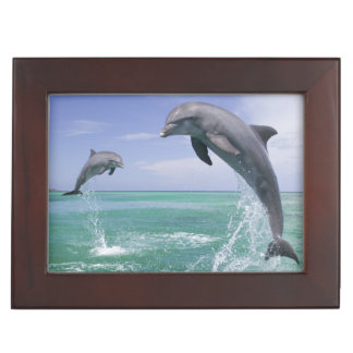 Bottlenose Dolphins Tursiops truncatus) 4 Keepsake Box