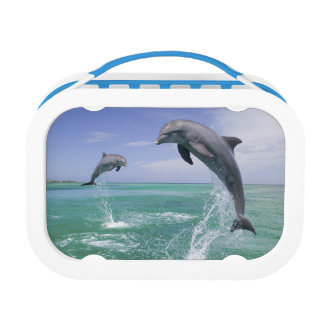 Bottlenose Dolphins Tursiops truncatus) 4 Lunch Box