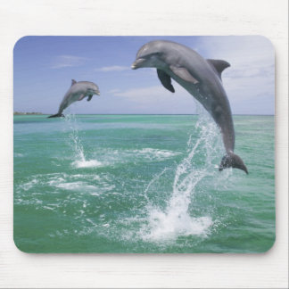 Bottlenose Dolphins Tursiops truncatus) 4 Mouse Mat