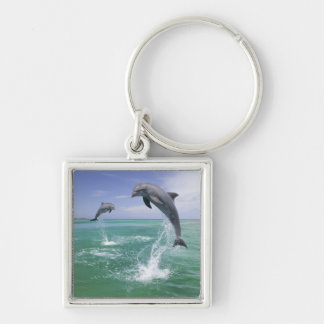 Bottlenose Dolphins Tursiops truncatus) 4 Silver-Colored Square Key Ring