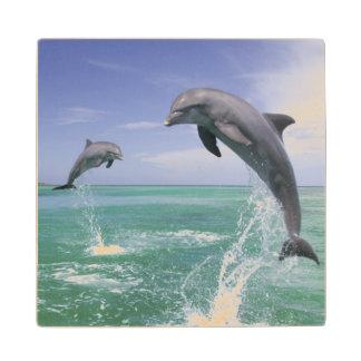Bottlenose Dolphins Tursiops truncatus) 4 Wood Coaster