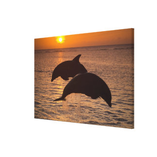 Bottlenose Dolphins Tursiops truncatus) 5 Stretched Canvas Prints
