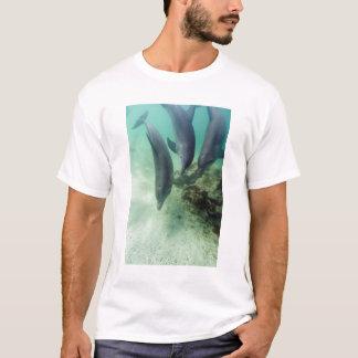 Bottlenose Dolphins Tursiops truncatus) 5 T-Shirt