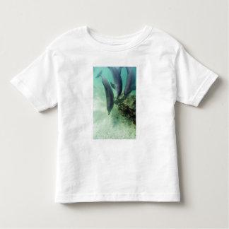 Bottlenose Dolphins Tursiops truncatus) 5 Toddler T-Shirt