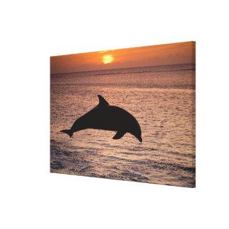 Bottlenose Dolphins Tursiops truncatus) 6 Gallery Wrap Canvas