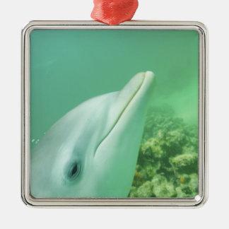 Bottlenose Dolphins Tursiops truncatus) 7 Christmas Ornament
