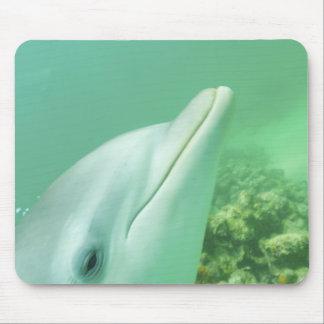 Bottlenose Dolphins Tursiops truncatus) 7 Mouse Mat
