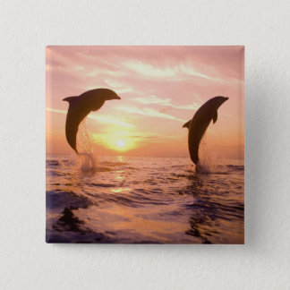 Bottlenose Dolphins Tursiops truncatus) 8 15 Cm Square Badge