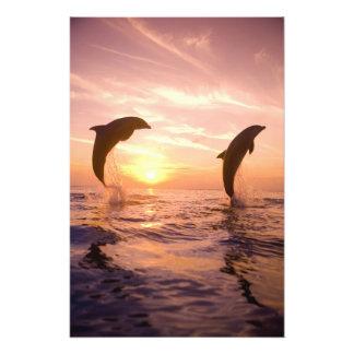 Bottlenose Dolphins Tursiops truncatus) 8 Photo Art
