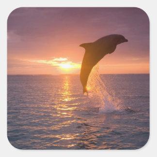 Bottlenose Dolphins Tursiops truncatus) 9 Square Sticker