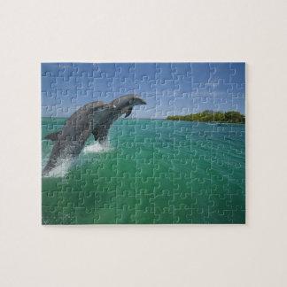 Bottlenose Dolphins (Tursiops truncatus) Jigsaw Puzzle
