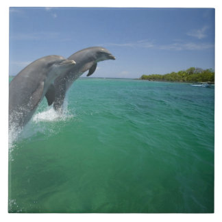 Bottlenose Dolphins (Tursiops truncatus) Large Square Tile