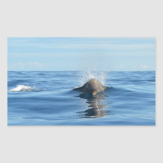 Bottlenose Whale Rectangular Sticker