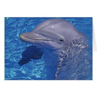 Bottlenosed Dolphin, Tursiops Truncatus Card