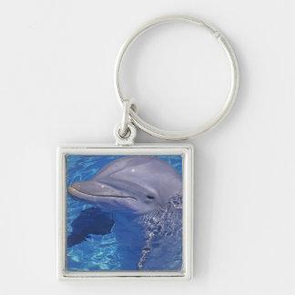 Bottlenosed Dolphin, Tursiops Truncatus Key Ring