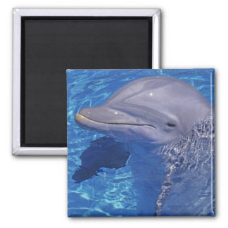 Bottlenosed Dolphin, Tursiops Truncatus Magnet