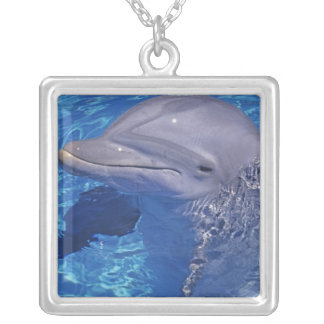 Bottlenosed Dolphin, Tursiops Truncatus Silver Plated Necklace